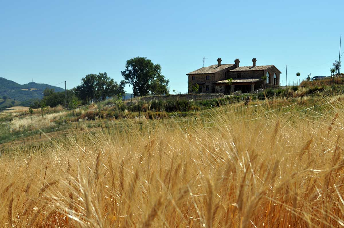 Azienda agricola – foto 7