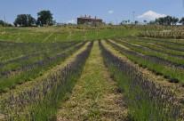 Azienda agricola – foto 9