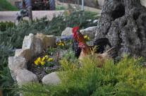 galline – foto 2 – Agriturismo La Valle Dimenticata